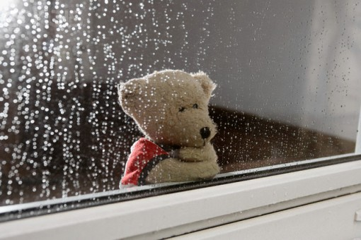 Teddy Bear Looking out of Window