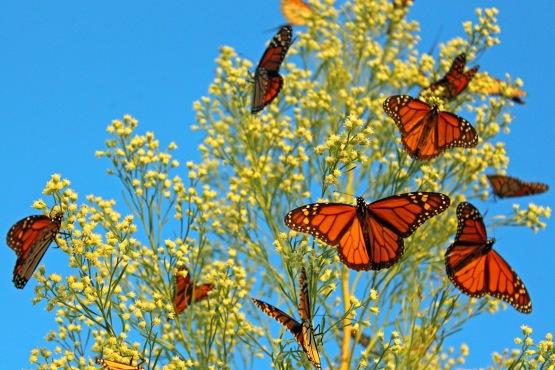 Butterflies I